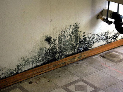 Cleaning Black Mold Home